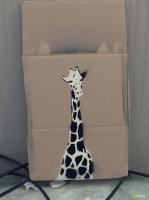 27_giraffe10550.jpg